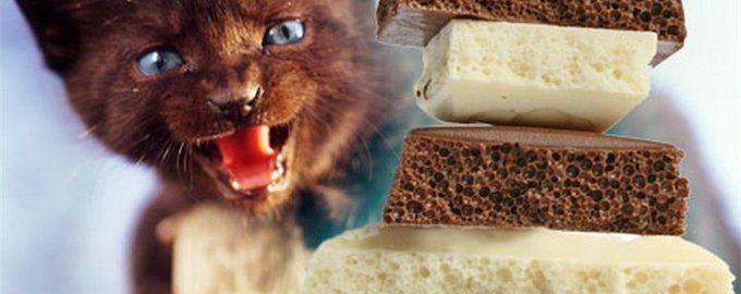 можно ли кошкам шоколад
